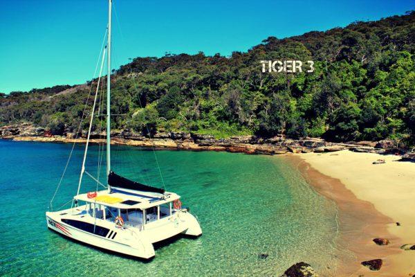 tiger3-002