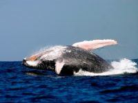whale_watching 300x225