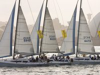 Sydney_Club_Race_cat