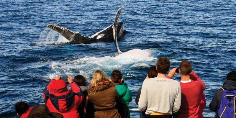 whalewatchingboat