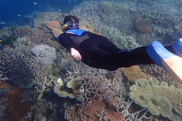 Snorkeling Whitsundays